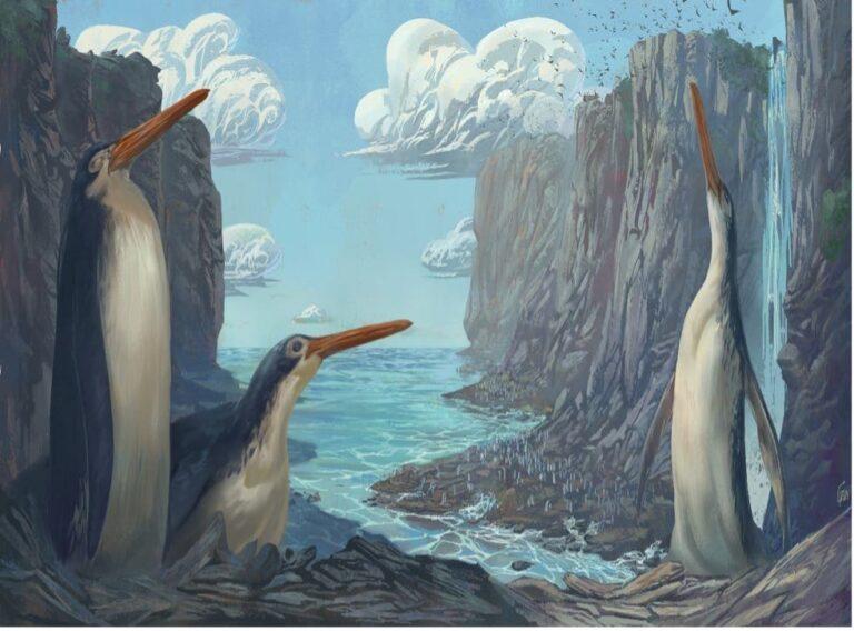 Niños descubrieron hace 15 años el fósil de un pingüino gigante de piernas largas