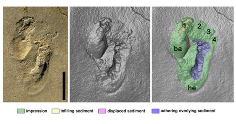 Podríamos estar frente a las huellas de homínidos más antiguas jamás encontradas