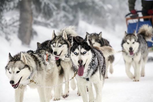 Muestras de ADN de perros revelan una ancestral red comercial desde Siberia hasta el Mar Caspio